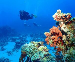 nature-travel-people-sea-blue-activity-underwater-diving-coral-reef-scuba-diving_t20_QaOveE