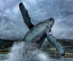 whale-breaching-out-of-the-water_t20_YVdJLR